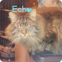 Adopt A Pet :: Echo - York, PA
