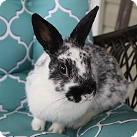 Adopt A Pet :: Sherri - Hillside, NJ