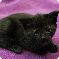 Adopt A Pet :: Flop - Mebane, NC