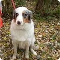 Adopt A Pet :: Otis ADOPTED!! - Antioch, IL