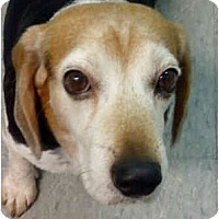 Adopt A Pet :: Marley - Indianapolis, IN