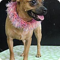 Adopt A Pet :: Zelda - Bedminster, NJ