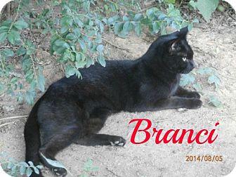 Domestic Shorthair Cat for adoption in Colbert, Georgia - Branci
