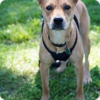 Adopt A Pet :: Lucky - Arlington, TN