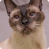 Adopt A Pet :: MONTY - Toledo, OH