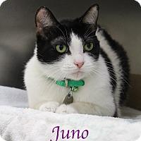 Adopt A Pet :: Juno - Bradenton, FL