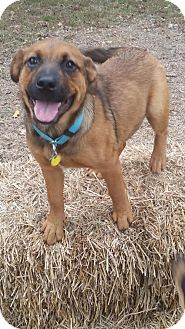 Shepherd (Unknown Type) Mix Dog for adoption in Manchester, Connecticut - Timber pending adoption