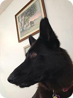 German Shepherd Dog Mix Dog for adoption in Manhattan, Kansas - Astrid