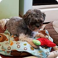 Adopt A Pet :: Abby - Schofield, WI