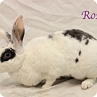 Adopt A Pet :: Rosie - Bradenton, FL