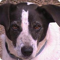 Adopt A Pet :: Pip - Kittery, ME
