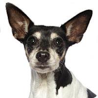 Adopt A Pet :: Biscuit - oakland park, FL