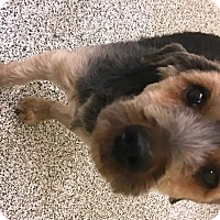 Adopt A Pet :: Bernie - Baltimore, MD