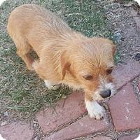 Adopt A Pet :: Ruff - Westminster, CO