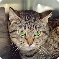 Adopt A Pet :: 10310200 - Brooksville, FL