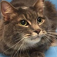 Adopt A Pet :: Emmy - South Saint Paul, MN
