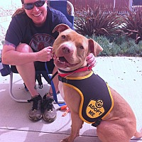 Adopt A Pet :: BRAVO - Ojai, CA