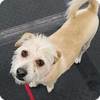 Adopt A Pet :: Tiana - Plainfield, IL
