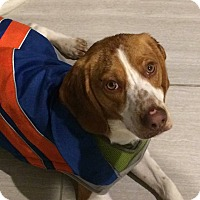 Adopt A Pet :: Charlie - Davison, MI
