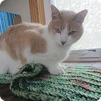 Adopt A Pet :: Sunny - Ridgway, CO