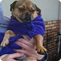 Adopt A Pet :: Mugsy - North Hollywood, CA