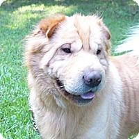 Adopt A Pet :: Chet - Mocksville, NC