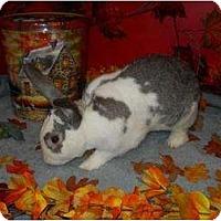 Adopt A Pet :: Astro - Roseville, CA