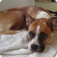 Adopt A Pet :: Chloe - Hamilton, ON