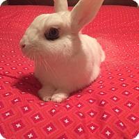 Adopt A Pet :: Aspen - Williston, FL