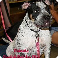 Adopt A Pet :: Natasha - Cheney, KS