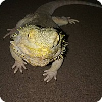 Adopt A Pet :: Celia - Souderton, PA
