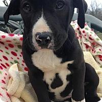 Adopt A Pet :: Tinley - Boston, MA