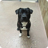 Adopt A Pet :: Leonardo - Appleton, WI