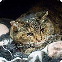 Adopt A Pet :: Scarbelly - Gardnerville, NV