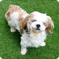 Adopt A Pet :: Luigi - N. Babylon, NY