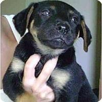 Adopt A Pet :: Kim - Alexandria, VA
