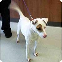 Adopt A Pet :: Mya in Houston - Houston, TX