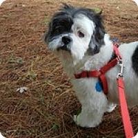 Adopt A Pet :: Pandora - Wilmington, MA