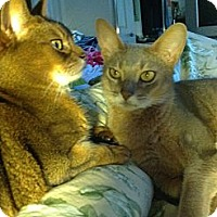 Adopt A Pet :: Hershey&Reeses - Laguna Woods, CA