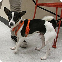 Adopt A Pet :: Puffy - Gilbert, AZ