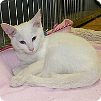 Adopt A Pet :: Cory - Dover, OH