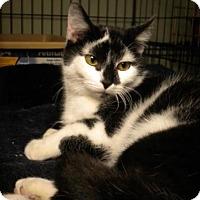 Adopt A Pet :: Posh - Columbus, OH