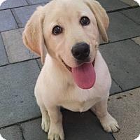 Adopt A Pet :: Xena - New York, NY