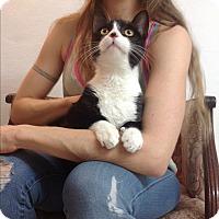 Adopt A Pet :: Talber - Brooklyn, NY