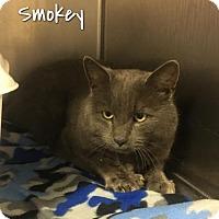 Adopt A Pet :: Smokey - Harrisville, WV