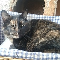 Adopt A Pet :: Yolanda - Pie Town, NM