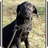 Adopt A Pet :: Rosemary - Milford, NJ