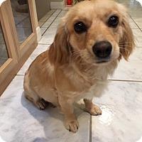 Adopt A Pet :: Addie - San Diego, CA