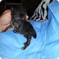 Adopt A Pet :: Jade - Piscataway, NJ