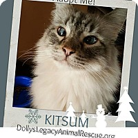Adopt A Pet :: KITSUM - Lincoln, NE